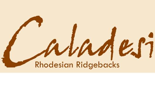 Home | Caladesi Rhodesian Ridgeback