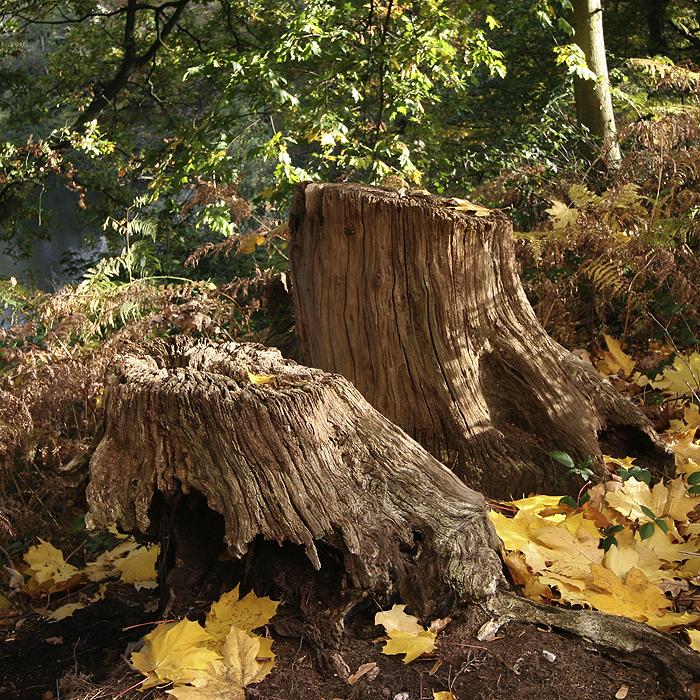 Forstwirtschaft ruft zum sorgsamen Umgang mit Holz auf
