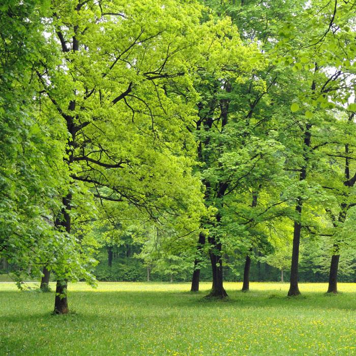 25 Jahre Grünes Band – Hauptschlagader für ein Netz des Lebens in Deutschland