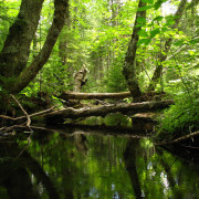 Der Zustand des deutschen Waldes hat sich weiter verbessert | Caladesi Rhodesian Ridgeback