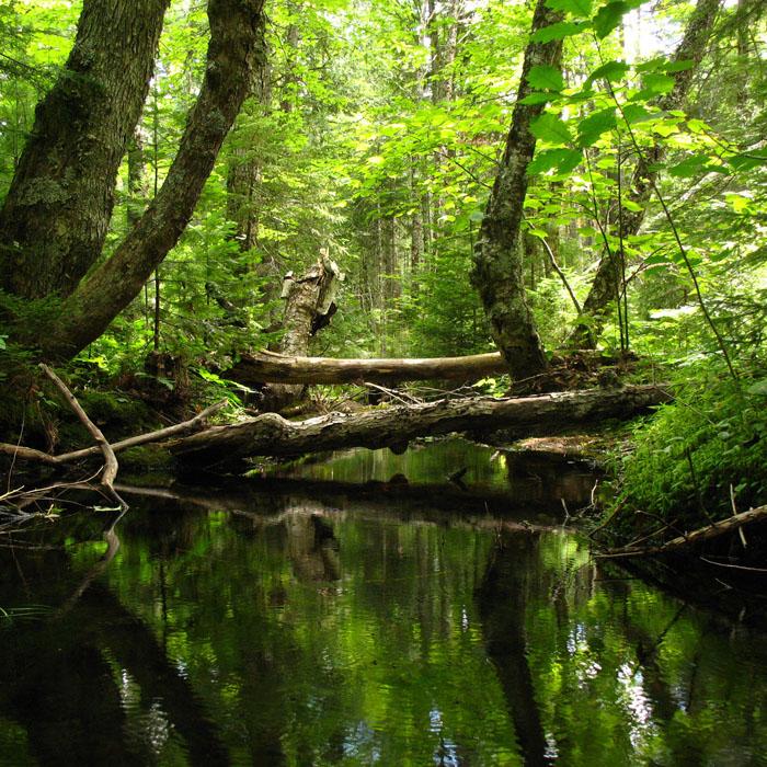 Der Zustand des deutschen Waldes hat sich weiter verbessert